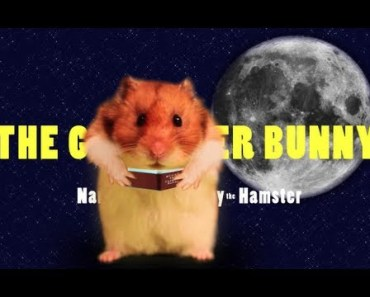 'The Gangster Bunny' - Hammy's Bedtime Stories - The Talking Hamster & The Bunny - the gangster bunny hammys bedtime stories the talking hamster the bunny