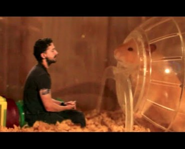 The Talking Hamster - My Week with Shia LaBeouf: Tuesday - the talking hamster my week with shia labeouf tuesday