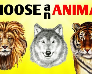 This Test Will Tell You What Animal You Are! - this test will tell you what animal you are