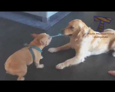 Top of The Day Funny Dogs, cats and duck 14,1,2018 Part16 - top of the day funny dogs cats and duck 1412018 part16