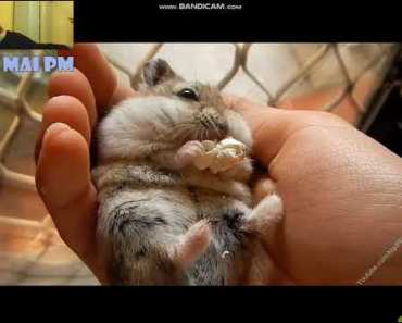 watching funny and cute hamsters - watching funny and cute hamsters