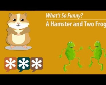 What's So Funny? – Two Frogs and a Hamster - whats so funny two frogs and a hamster