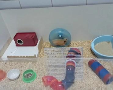Funny Hamster - 1518464245 funny hamster