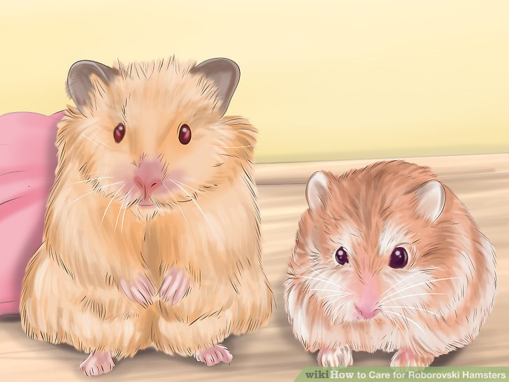 Look for signs of a healthy hamster