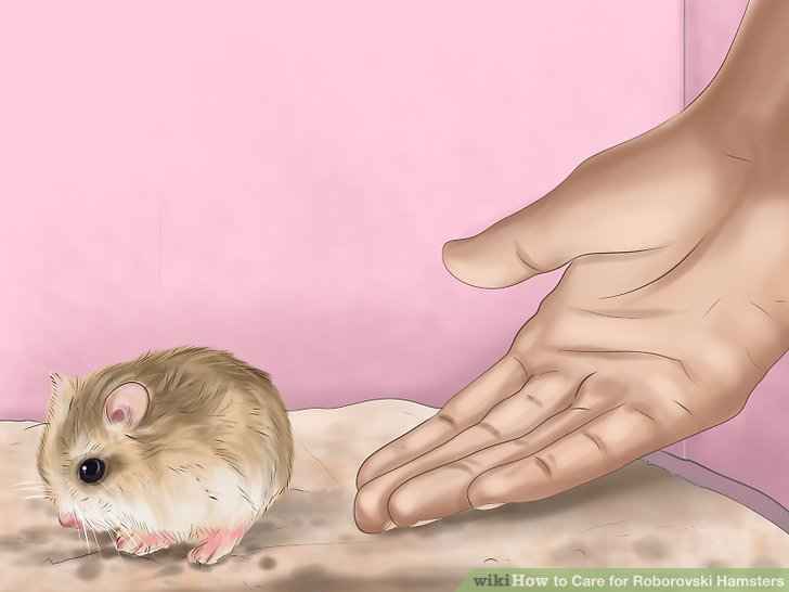 Respect your hamster's individual personality