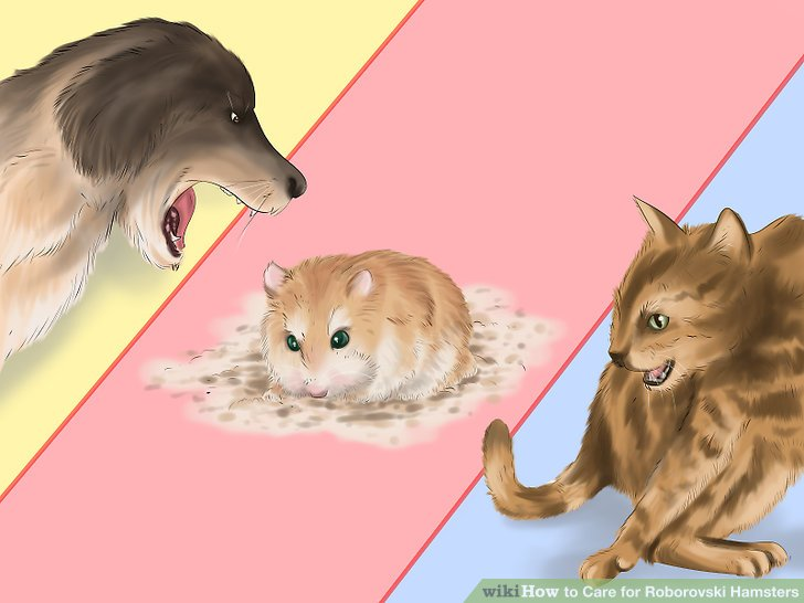 Keep your hamster away from other household pets, such as cats and dogs.