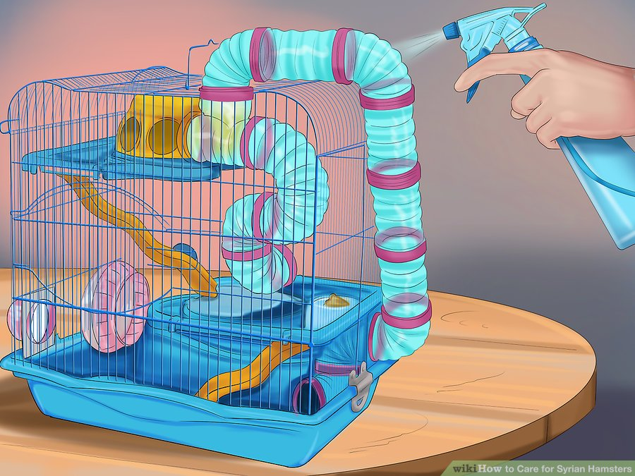 Keep your hamster's cage clean