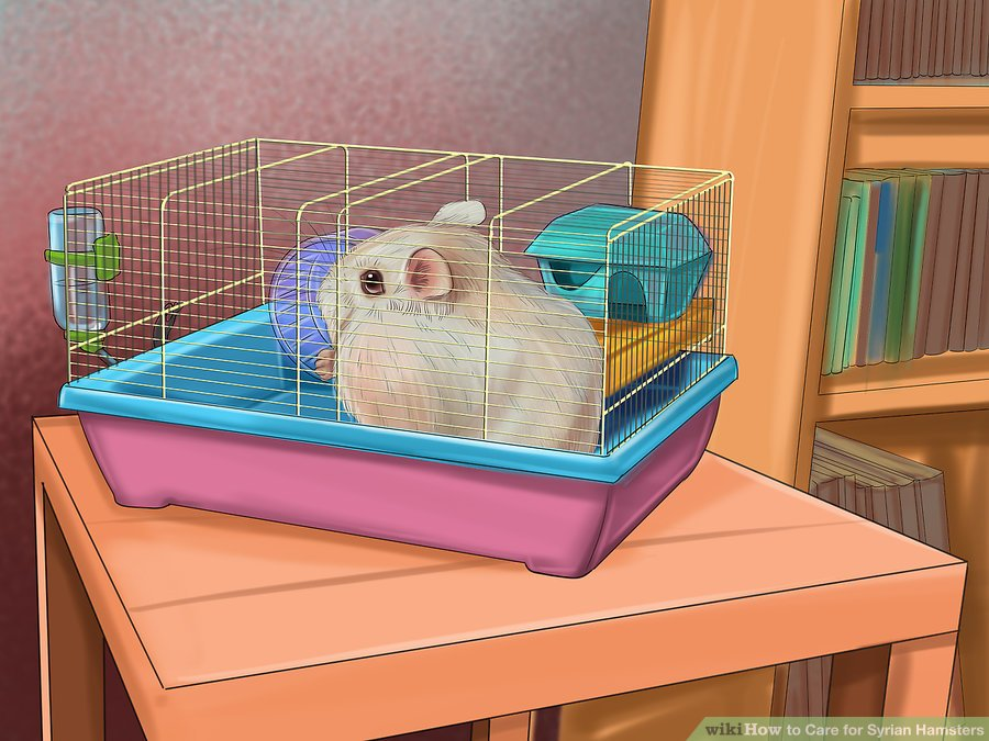 Locate the hamster's cage in a quiet place