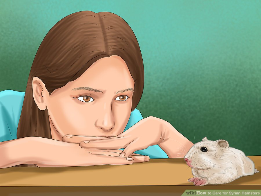 Start to interact with your hamster