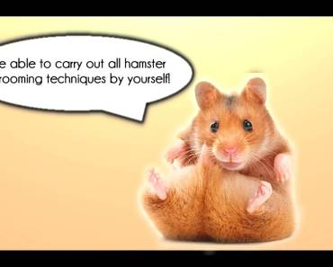 Hamster Care Guide For Beginners