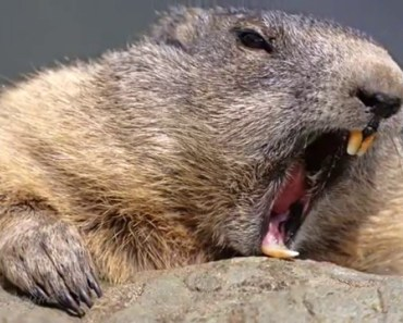 Animals Screaming Like Humans - Cutest Animal Videos Compilation 2018 [BEST OF] - animals screaming like humans cutest animal videos compilation 2018 best of