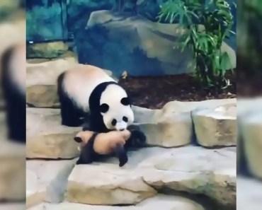 BEST ANIMALS OF 2018 | Funny Animals Video | Funny Dog | Funny Panda - best animals of 2018 funny animals video funny dog funny panda