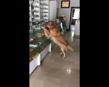 Daddy is sick.. Going to buy medicine for daddy-Funny Dog video - daddy is sick going to buy medicine for daddy funny dog video