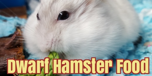 dwarf hamster food list