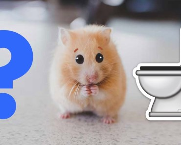 Flushing my emotional support hamster down the toilet - flushing my emotional support hamster down the toilet