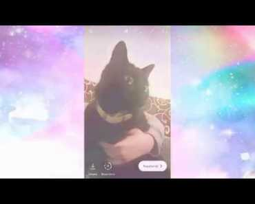 FUNNY & ADORABLE Kitten Compilation! - funny adorable kitten compilation