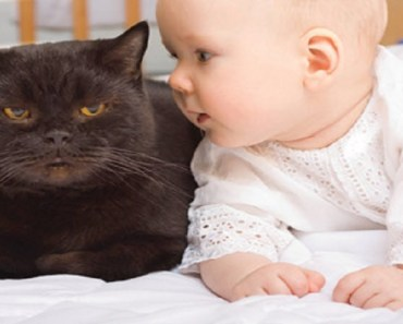 Funny And Cute Babies Talking To Cats - funny and cute babies talking to cats