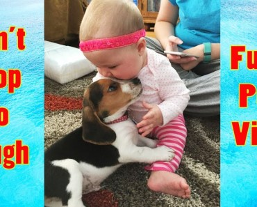 Funny Babies And Puppies Playing Together || Funny Pets Compilation - funny babies and puppies playing together funny pets compilation