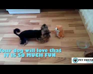 Funny talking hamster for your dog - funny talking hamster for your dog