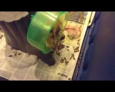 Hamster on hamster wheel Warning cute - hamster on hamster wheel warning cute