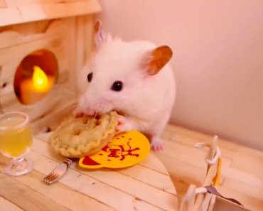 Hamsters - A Cute Hamster And Funny Hamster Videos Compilation - hamsters a cute hamster and funny hamster videos compilation