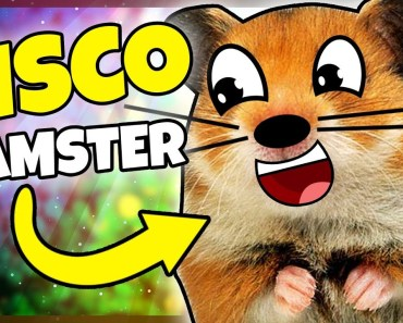 JEG ER EN DISCO-HAMSTER! - Dansk Roblox: Hamster Simulator - jeg er en disco hamster dansk roblox hamster simulator