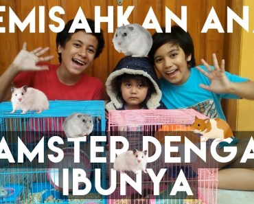 Kids Brother - Kapan Harus Memisahkan Anak Hamster Dengan Ibunya - kids brother kapan harus memisahkan anak hamster dengan ibunya