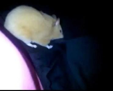 Mad Hamster!! - mad hamster