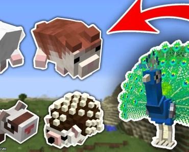MİNECRAFT EVCİL HAYVANLAR MODU (Kirpi,Tavus Kuşu,Hamster) - Hamster Modu - minecraft evcil hayvanlar modu kirpitavus kusuhamster hamster modu