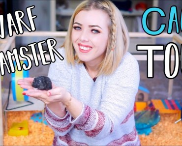 Moving My Hamster Into His New Cage | Dwarf Hamster Cage Tour - moving my hamster into his new cage dwarf hamster cage tour