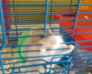 My little hungry hamster - my little hungry hamster