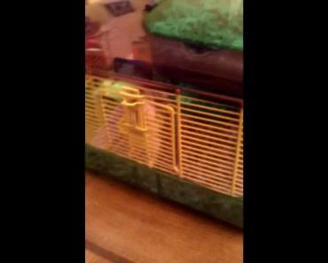 Rubber Hamster (funny) - rubber hamster funny