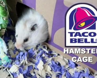 TACO BELL HAMSTER CAGE - taco bell hamster cage