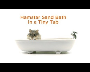 Taco Taco & Soda Pop - hamster sand bath in a tiny tub - taco taco soda pop hamster sand bath in a tiny tub