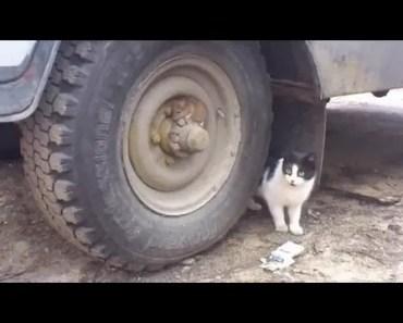 Tom and Jerry Real Life - tom and jerry real life