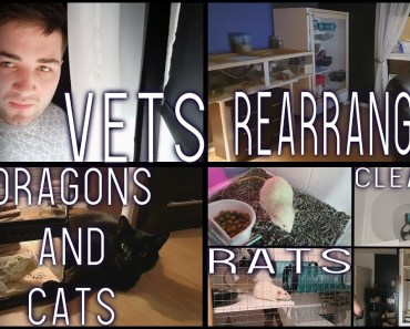 Vets, Cleaning, Rearranging, Cats, Rats & Dragons... VLOG - vets cleaning rearranging cats rats dragons vlog