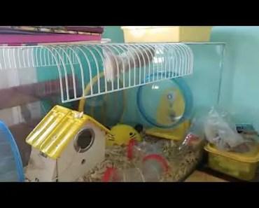 Funny hamster video - 1521720833 funny hamster video