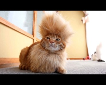 CATS you will remember and LAUGH all day! - World's funniest cat videos - cats you will remember and laugh all day worlds funniest cat videos