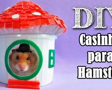 Como fazer uma casinha para Hamster - Casinha para hamster #2 | AnimalPetFans - como fazer uma casinha para hamster casinha para hamster 2 animalpetfans