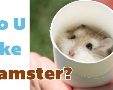 Cute & Funny hamsters compilation #1 || Pet Stars || Cute Animals - cute funny hamsters compilation 1 pet stars cute animals