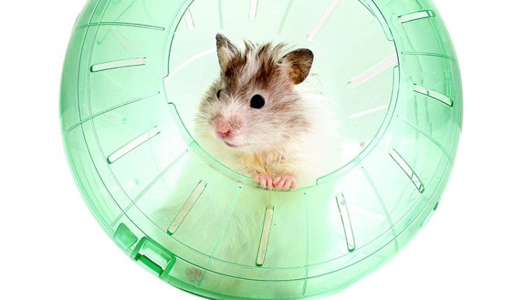 Hamster Toy Ideas