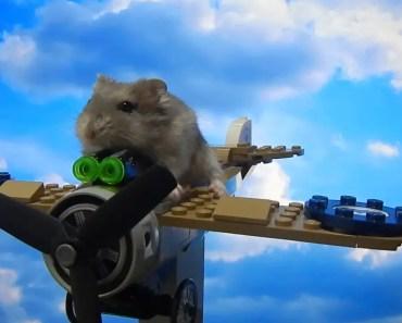 Hamster super pilot - hamster super pilot