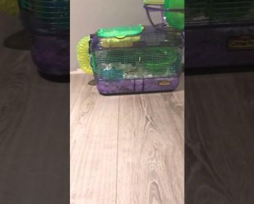 Hamsters cage - hamsters cage