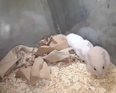 Hamster's having fun - hamsters having fun