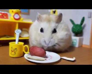 Happy Hamster in Cute House [Cute Animal Vid] - happy hamster in cute house cute animal vid