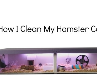 How I Clean And Design My Hamster Cage - how i clean and design my hamster cage