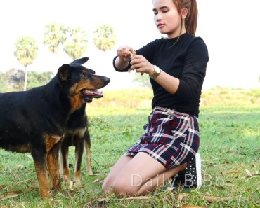 Lovely amazing girl playing with groups of baby cute dog - funny cute dog part 15 - lovely amazing girl playing with groups of baby cute dog funny cute dog part 15
