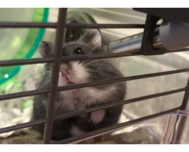 My Cute Hamster in his Mini Mansion - my cute hamster in his mini mansion