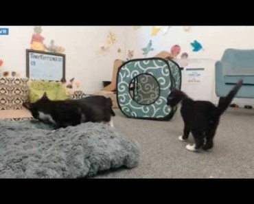 Tiny Kittens Shadow boxing funny at about 2:35 - tiny kittens shadow boxing funny at about 235