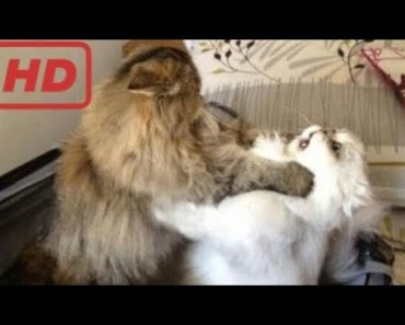 You will NEVER WIN THIS TRY NOT TO LAUGH CHALLENGE - Funny ANIMAL compilation - you will never win this try not to laugh challenge funny animal compilation